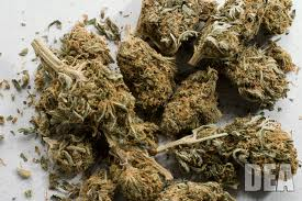 Souki's bill would allow personal possession and non-public use of up to one ounce of marijuana by those over 21. Department of Justice photo.