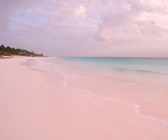 The gallery for hawaii pink sand beach for Pink sands harbour island bahamas