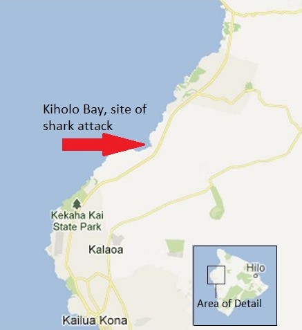UPDATE: No Sharks Spotted, Kiholo Bay Reopened