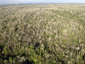 The deforestation is evident in this photo by William Haines, a faculty member at the University of Hawaii at Manoa. (Click on image to enlarge.)