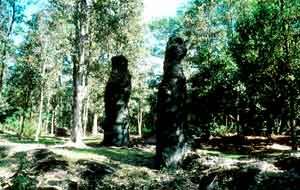 Lava Tree State Monument. DLNR photo.