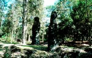Lava Tree State Monument. DLNR photo.