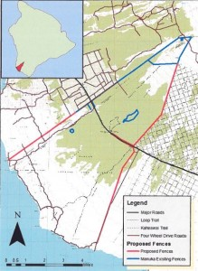This map shows the location of fencing proposed for ungulate control in the Manuka Natural Area Reserve in Ka`u. The red lines indicate new fencing, while blue ones show existing fencing already in place (click to enlarge). DLNR image.