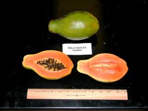 The popular Sunrise variety of papaya. UH photo.