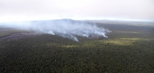 Lava flows enter the forest northeast of Puʻu `O`o, visible in the background, in this photo taken Dec. 26. USGS photo.
