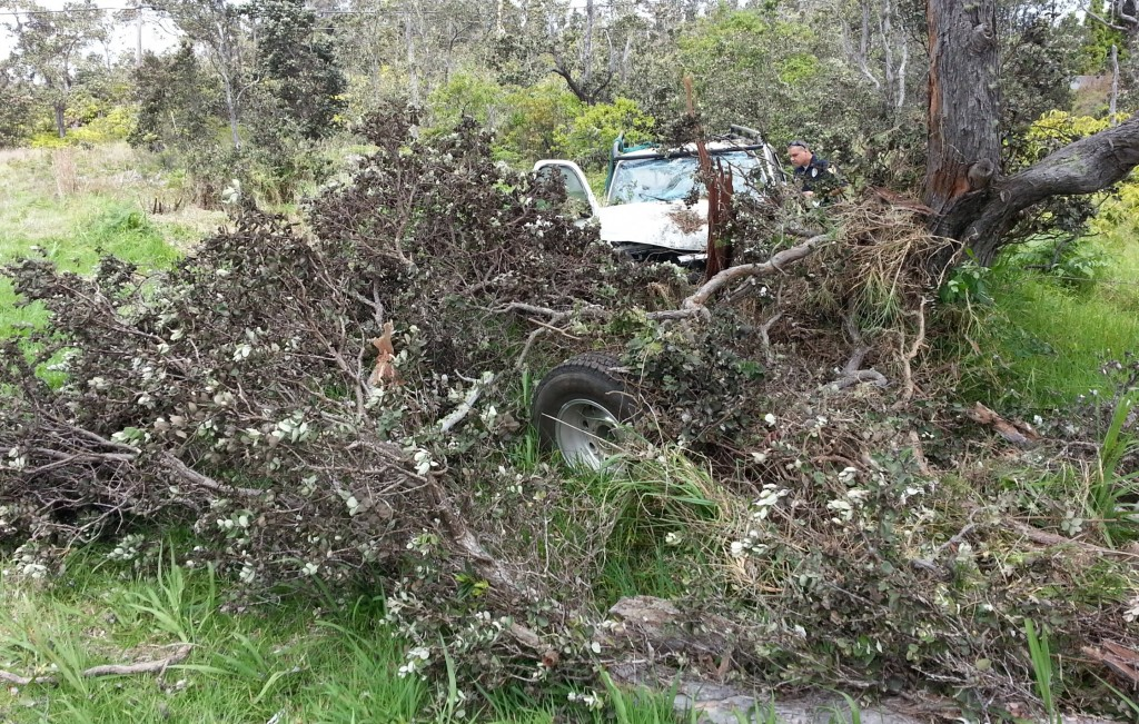 This yea-on view of the truck shows the damage it did to the ohia tree. The truck's left front tire0s sitting amidst a broken branch. Photo by Dave Smith.