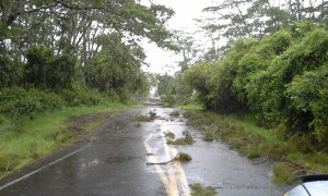 Damage from Iselle on Friday morning, Aug. 8. Photo by Ilene Alford.