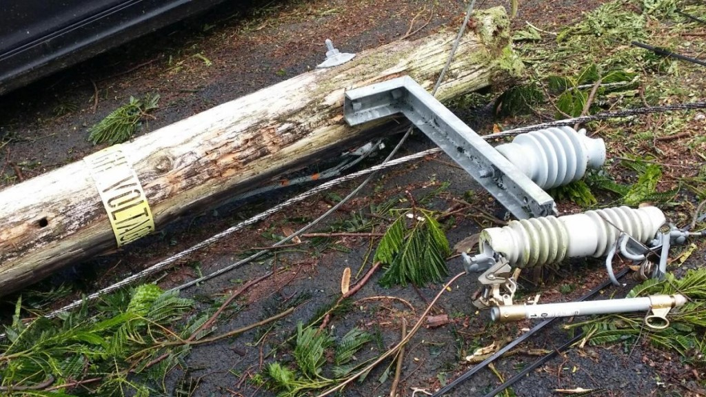 A utility pole sits severed along a roadway in Hawaiian Paradise Park. Photo by Kristin Hashimoto.