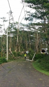A worker picks through debris while clearing power lines in Hawaiian Paradise Park. Photo by Kristin Hashimoto.