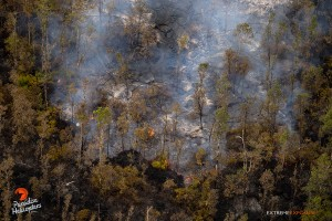 This photo taken on Jan. 15 shows an active lobe as it moves through an area recently scorched by a brush fire it spawned. Photo: Extreme Media Exposure/Paradise Helicopters.