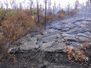 One of the small active breakouts along the distal tip of the flow is seen in this photo taken on Jan. 21. HVO photo.