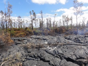 This photo taken on Jan. 21 shows a downslope view at the leading tip of the flow, which is surrounded by burned vegetation. HVO photo.