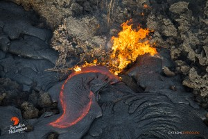 In this photo taken on Feb. 6 a shrub bursts into flames as pahoehoe makes its way into an old field of 'a'a. Photo credit: Extreme Exposure/Paradise Helicopters.