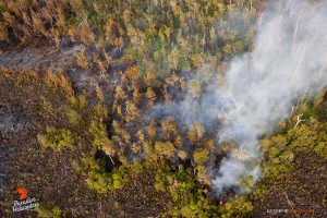 In this photo taken o Feb. 6, activity continued in the flow field downslope of Pu'u 'O'o, as lava began entering the forest bordering the northern perimeter. Photo credit: Extreme Exposure/Paradise Helicopters.