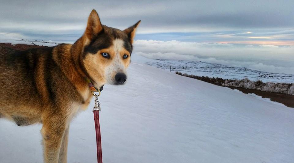 Mauna Kea Snow /  Image: Kathy Kim Peters