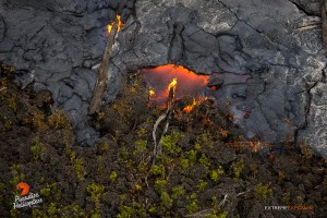 In this photo, taken March 16, Pahoehoe creeps over an old 'a'a flow and encroaches upon ohia saplings. Photo credit: Extreme Exposure Media/Paradise Helicopters.