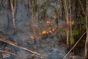 In this photo, taken March 27, a finger of lava flows through an ohia forest, consuming the understory of hapu'u ferns. Photo credit: Extreme Exposure Media/Paradise Helicopters.