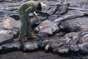 In this photo, taken March 17, a Hawaiian Volcano Observatory geologists gets a fresh lava sample closest to the vent as possible. The sample is sent to the University of Hawai'i at HIlo for quick analysis of a few components and prepared for a fuller analysis of its chemical components by a lab on the mainland. USGS HVO photo.
