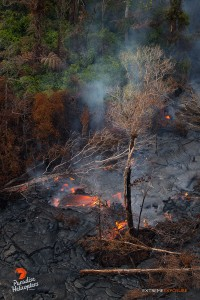 April 16, 2015. Lava continued to advance into forested areas about 5 miles downslope of Pu'u 'O'o crater. Photo credit: Extreme Exposure Media/Paradise Helicopters.