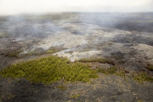 This photograph, taken on April 9, looks east and shows the breakout about 6 km from Puʻu ʻŌʻō. This breakout consists of several narrow lobes that have expanded the June 27th lava flow margin by a minor amount, with a small amount of vegetation burning. USGS HVO photo.