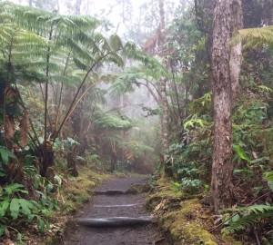 Crater Rim Trail winds through the native rainforest surrounding Kīlauea caldera in Hawai'i Volcanoes National Park. NPS Photo/Jessica Ferracane.