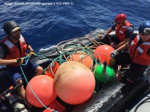 2/20/15. King/NOAA MMHSRP photo.