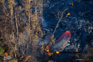 June 25: A finger of lava takes a tree as it flows eastward.  Photo: Extreme Exposure Media/Paradise Helicopters.