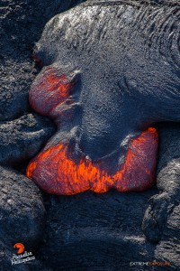 2015 06 25 - Puna, Hawaii:  A toe of lava pushes through its thickened skin.  Photo: Extreme Exposure Media/Paradise Helicopters