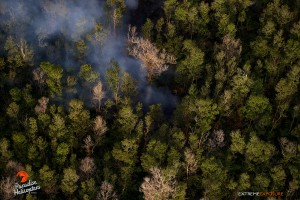 June 4: The distal tip creeps into the ohia forest. Photo: Extreme Exposure Media/Paradise Helicopters.