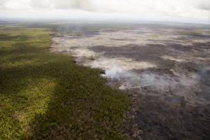 July 23: A closer look at the north margin of the June 27, 2014 lava flow, where breakouts are active at the forest boundary. USGS/HVO photo.
