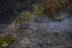 July 9: Activity near the distal tip continues to consume remaining stands of ohia trees in the middle of the flow field.  Photo: Extreme Exposure Media/Paradise Helicopters.