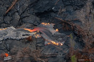 July 23: A lobe of lava begins consuming toppled trees lying on a recent flow.  Photo: Extreme Exposure Media/Paradise Helicopters.