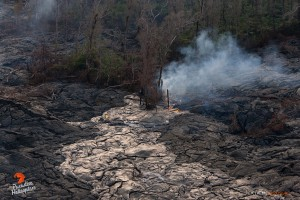 July 23:   A lobe of lava extends over a previous flow, and begins consuming trees along the perimeter.  Photo: Extreme Exposure Media/Paradise Helicopters.