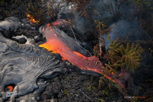 July 23: A fresh breakout of lava pushes into a forest, consuming 'ohia and hapu'u.  Photo: Extreme Exposure Media/Paradise Helicopters.