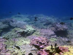 Papahânaumokuâkea Marine National Monument