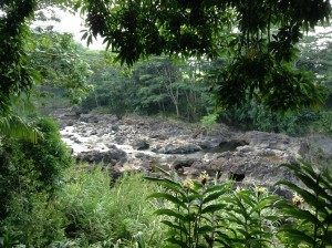 View towards the mauka (mountain) end above Rainbow Falls. Photo: Jamilia Epping.