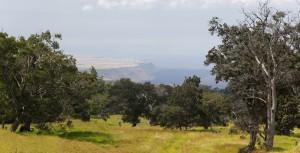 Aussicht auf South Point von der ehemaligen Ranch und neuen Kahuku Unit, Hawaii Volcanoes National Park, Big Island, USA