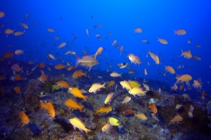 NOAA file image.