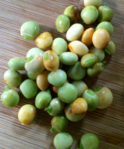 Gradule beans. Photo credit: Kristin Frost Albrecht.