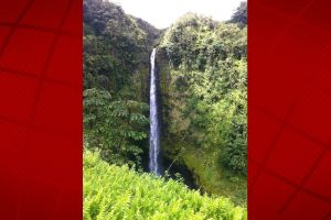 Akaka Falls State Park. Photo credit: Jamilia Epping.