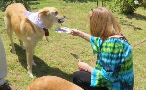 North Hawai'i Community Hospital courtesy photo of its Pet Therapy Party.