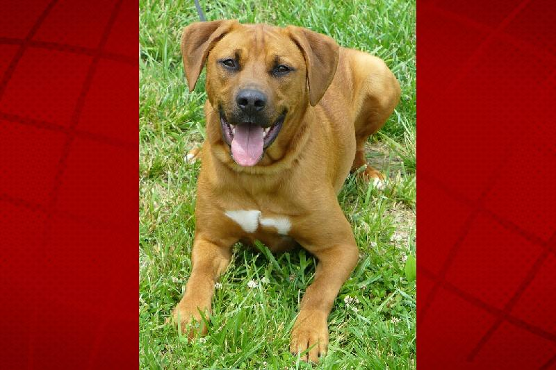 Where To Adopt A Dog In Kona Big Island