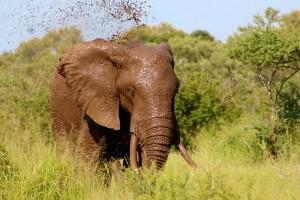 elephant pixabay
