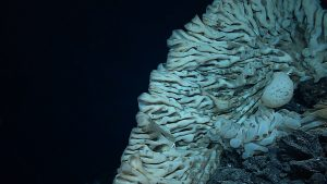 Photo courtesy of NOAA Office of Exploration and Research/Hohonu Moana 2015.