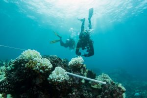 Coral Bleaching West Hawai'i. Photo credit: The Nature Conservancy of Hawai'i