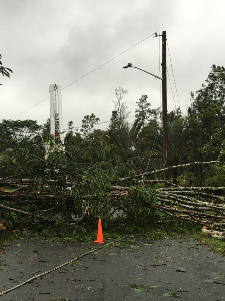 A Hawai'i Electric Light crew works to clear a fallen albizia tree from power lines in Pohoiki. Courtesy photo.