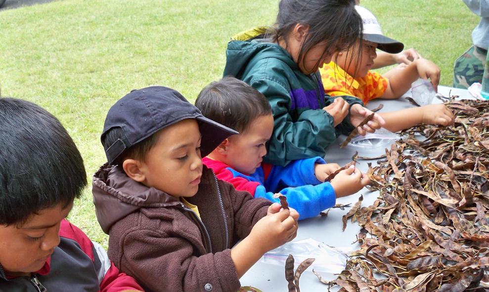 Keiki help collect plants seeds for Kahuku 'Ohana Day. NPS photo.