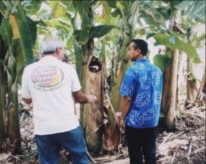 Meeting with Michael Tarring, president of 'Ohana Banana Farms, in Puna.