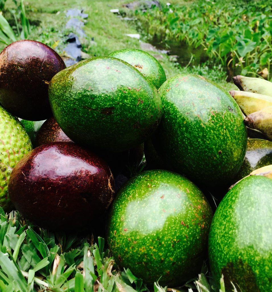 Avocado. Darde Gamayo photo.