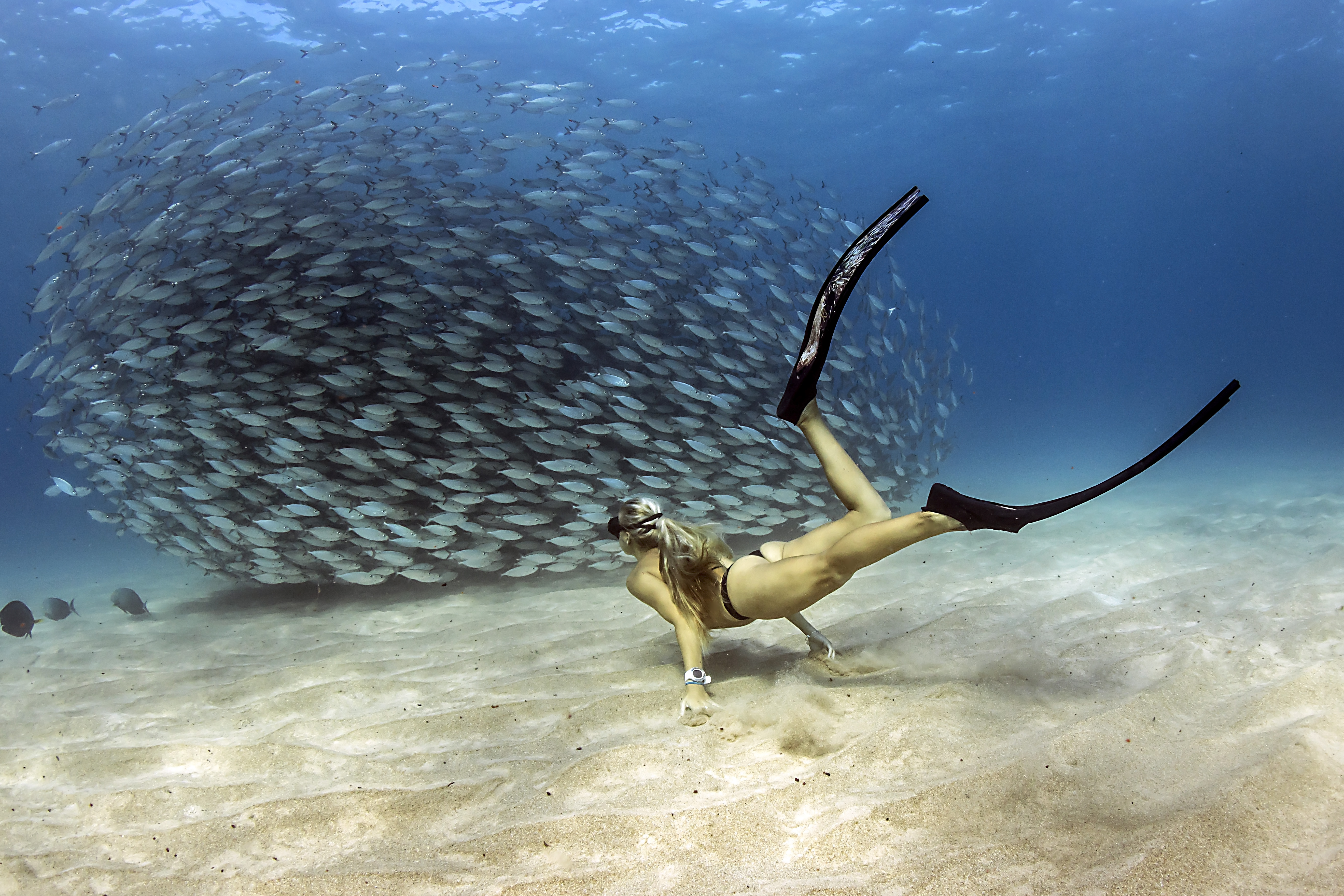 Kona Among Best Free Diving Locations In The World